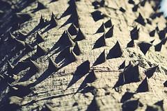 Palo Borracho (JavierAndrés) Tags: naturaleza plant abstract tree planta nature 50mm nikon 14 árbol trunk spines thorn abstracto tronco hdr cortex spiked espinas corteza paloborracho chorisia algodonero d3100