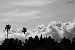 Palmeras en contraluz (Marta Monlen) Tags: sky blackandwhite cloud blancoynegro contraluz nikon palm cielo nubes palmera backlighting nikond700 2470mm28f