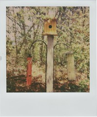 Food and Home (JoexEdge) Tags: house bird project polaroid 600 feeders impossible 2014 roidweek