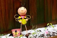 Hail (rsoputro) Tags: bee garden hail