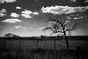Natureza em branco e preto... (Claudia Oseki) Tags: road brazil sky blackandwhite white black tree nature brasília branco brasil landscape bush cloudy paisagem preto estrada goiânia blackdiamond goiás brancoepreto cloudys mygearandme
