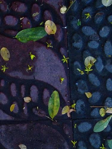 Tras la lluvia fuerte by JoseAngelGarciaLanda