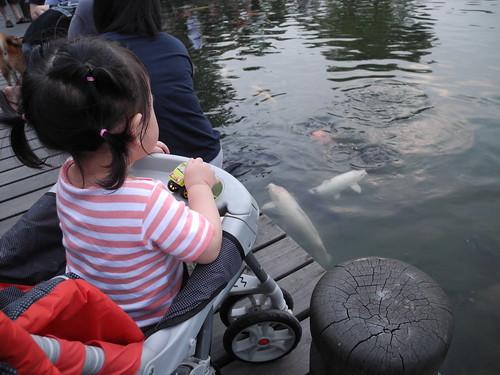 羅東運動公園_餵魚