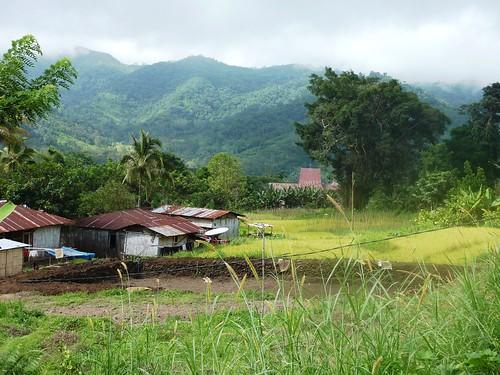 Flores-Maumere-Moni-Route (93)
