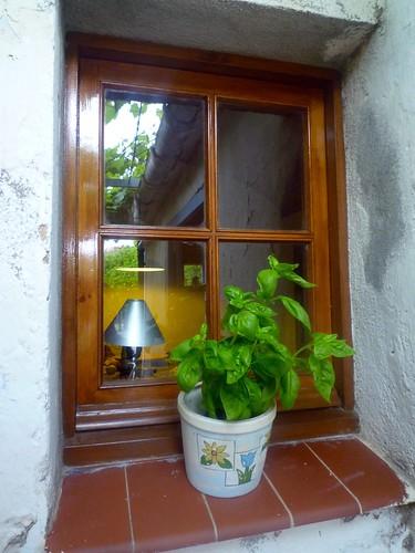alfàbrega a la finestra