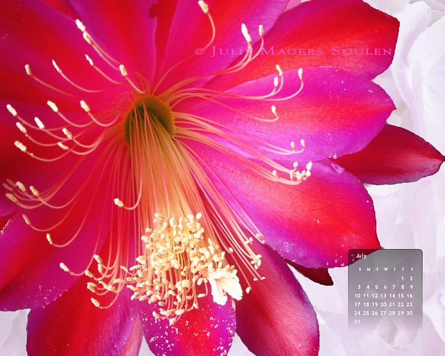07-11 Red Fireworks Flower Wallpaper Calendar 1280x1024