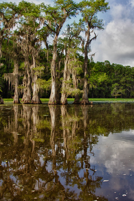 Caddo Lake Tx