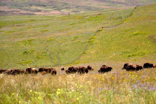 montana july 2011_1882