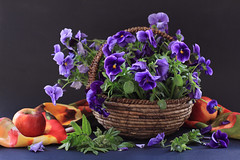 Pansy Violets And Apples (panga_ua) Tags: blue stilllife green composition scarf canon thought dof basket expression availablelight pansy ukraine fabric cast apples violets pansies viola arrangement tabletop bodegon artisticphotography naturamorta stumbleupon blueflowers artphotography georgiaokeeffe richcolors humanface pierrejosephredout stilllifeart nataliepanga therespansiesthatsforthoughts dartkbackground pansyvioletsandapples