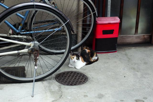Today's Cat@2011-07-07