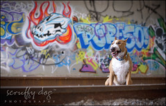 memphis reviews his custom graffiti (illona) Tags: graffiti bullterrier traintunnel tanandwhite