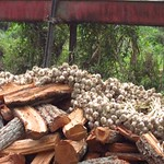 "Garlic and Lumber <a style=""margin-left:10px; font-size:0.8em;"" href=""http://www.flickr.com/photos/14315427@N00/6924325430/"" target=""_blank"">@flickr</a>"