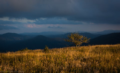 Evening Light (Matt Williams Gallery) Tags: mattwilliamsphotography nikon d7100 landscape landscapephotography nature naturephotography naturallight light clouds cloudy golden dark shadows mountains appalachiantrail humpmountain roanhighlands hiking fineartphotography sunset goldenhour camping tree valley warm cold