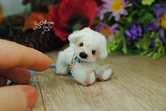 rex03 (Zhanna Zolotina) Tags: miniature dog ooak handmade toyzz tinydolhousetoyzz altair teddy bear dollhouse puppenhaus blythe