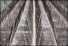 No Pigeons (Ingo Tews) Tags: portugal lisbon lisboa lissabon pigeons tauben steel needle needles stahl nadel nadeln metal metall roof dach tower turm minimalism minimalistisch minimalistic symmetry symmetrie muster lines linien concrete beton broken brokensymmetry