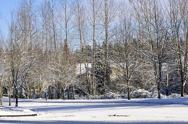 Snow Day_11 23 10_0004