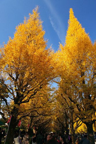 Yellows in Autumn #1