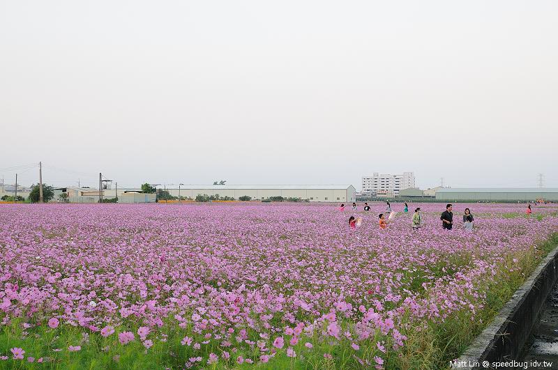 大寮花海 (16).jpg