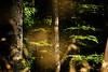 Woodland-Haven-04