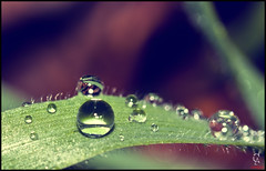 After the rain (Cdric A. Photographie ) Tags: france water rain photo drops eau flickr image pluie com provence flick goutte bibliotheque vaucluse carpentras canon60mmmacro canoneos50d