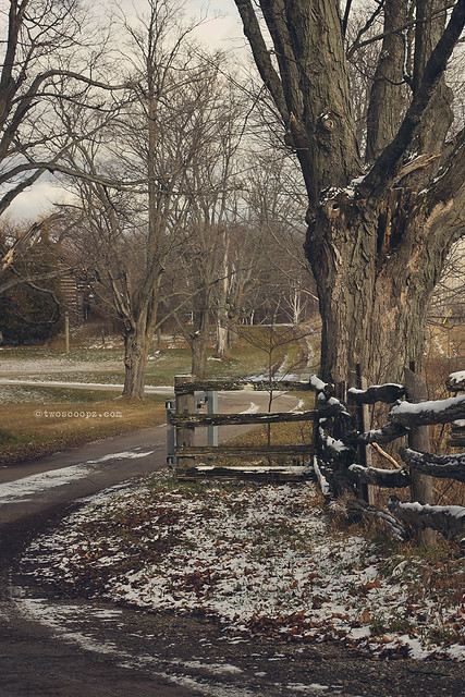 winding fence 337/365