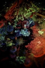 Looks like it's in space.. (SebastianBinczak) Tags: winter brown house snow cold green ice photo nikon raw purple bigma sigma flake os apo greenhouse grapes favourites grape dg 50500mm hsm d700 f4563 4563