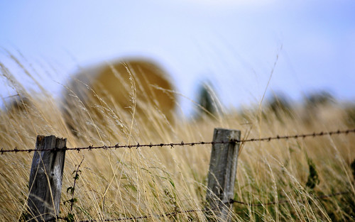 Hay Behind The Fence