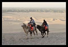 Max & Qool at Gobi Desert (Azmi Bogart) Tags: sand desert camel chan shan dunhuang mingsha qool maxby