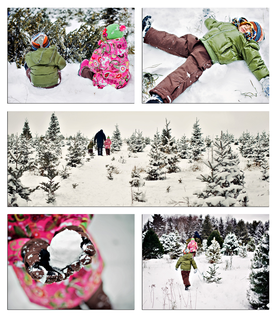 Storyboard snowy tree farm