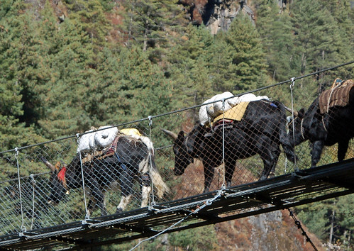 5yaks on bridge close! copy.jpg