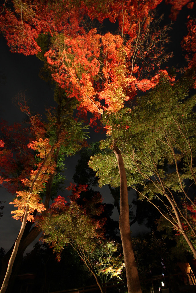 Kitanotenmangu Red Leaf Lightup 2010 (13)