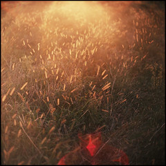 In the meadow (Denis Allbertovich) Tags: light sun colour 120 6x6 film mediumformat square photo warm mood dof kodak bokeh flare epson kiev88 ektar v700 autaut kaleinar