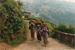 Tea pickers (FlyingTales) Tags: india darjeeling teaplantation westbengal teapickers india1987