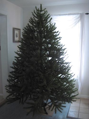 Tree- Step 6