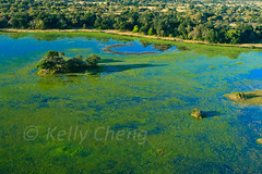 Botswana-070625-196 (Kelly Cheng) Tags: africa travel blue color colour green tourism nature water sunshine horizontal river landscape daylight colorful day outdoor vivid sunny delta nobody nopeople botswana colourful copyspace okavangodelta traveldestinations