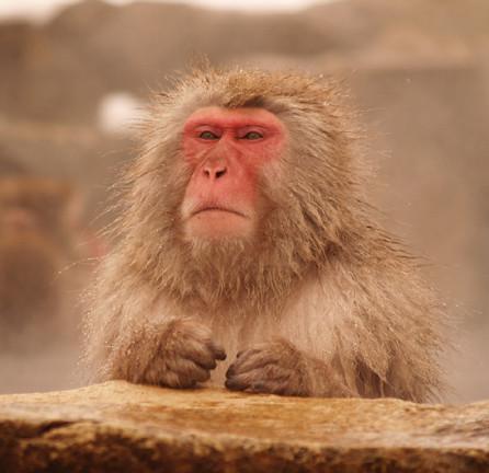 床墊秋刀魚羨慕日本雪猴說人生