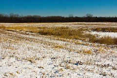 _MG_3043 Stark Landscape (www.cemillerphotography.com) Tags: trees winter lake snow cold ice nature forest landscape outdoors pond grain scenic farmland fields marsh prairie hay bales frigid preserve