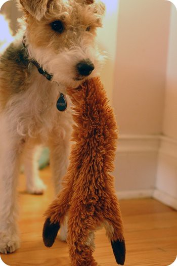 Piper and Foxy