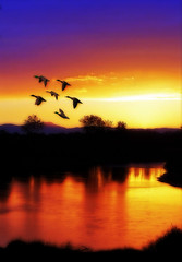 flying back home (Diana_Khalil) Tags: sunset lake birds oregon landscape northwest ducks goldenhour colorfulsky flyingbirds goldenhorizon bestofblinkwinners