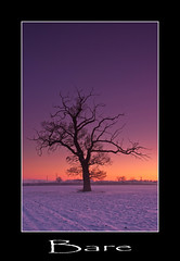 Bare. (numanoid69) Tags: uk winter sunset england snow cold tree ice twilight dusk freezing gloucestershire saul leefilters fujis5pro