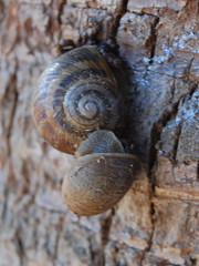 Swirly snail on snail action (An Owl With Knees) Tags: animal snail swirl creature smushy