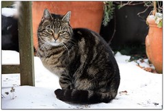 Waiting for Breakfast.... (Donna JW) Tags: cat feline tabby pet snow winter pregamewinner gamewinner challengegamewinner 15challengeswinner friendlychallenges herowinner ultrahero
