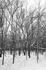 White Christmas (Dean Gulstad) Tags: trees winter blackandwhite snow nature minnesota outdoor stpaul fortsnellingstatepark
