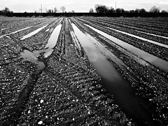 after the rain (fabry ... ) Tags: blackwhite fabrizio bianconero circolofotograficopaullese ricoh200gx
