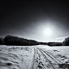 The Path [Front Page] (HD Photographie) Tags: snow france tree monochrome landscape pentax explorer ardennes front explore page neige hd paysage tamron fp frontpage arbre herv k7 dapremont hervdapremont