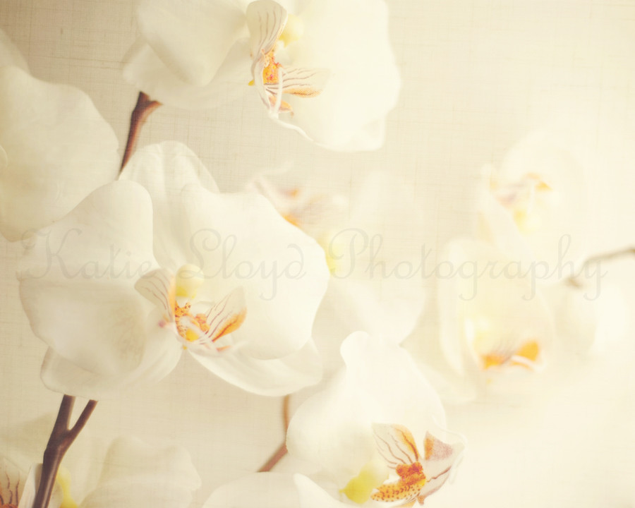 Orchids-and-Linen---8x10-wm