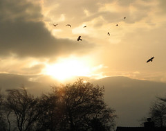 birds-sun (adstream) Tags: morning sun birds clouds flying gulls