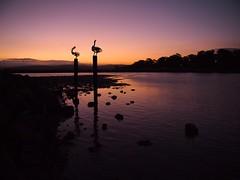 Merimbula sunset view (Australia) (paularps) Tags: travel holiday seascape nature landscape vakantie flickr pacific culture australia olympus leisure downunder 2010 australie reizen flickrcom destinations australi vakantiefotos adventuretravel arps paularps olympusepl1