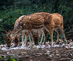 Dudhwa National Park - 3 (Raju Bist) Tags:
