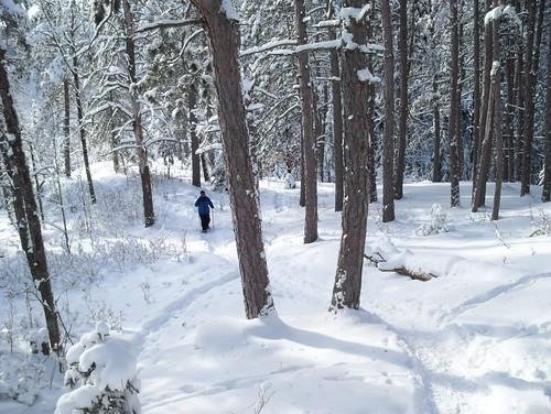 snowshoe woods